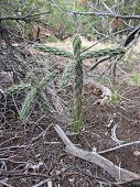 Glorieta Expeditions - Cactus are everywhere.