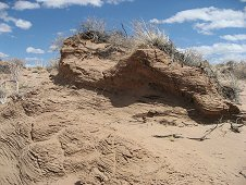 Holbrook Expeditions - Sand dune in strewnfield.