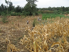 Thika, Kenya Expedition - Mike hunting a corn field with a couple local farmers.