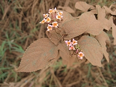 Thika, Kenya Expedition - These flowers had to work a little harder to be seen through the dirt.