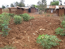 Thika, Kenya Expedition - Buildings of a small farm.