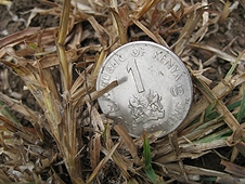Thika, Kenya Expedition - While I did not find a meteorite, I DID find a One Shilling coin in a field!!